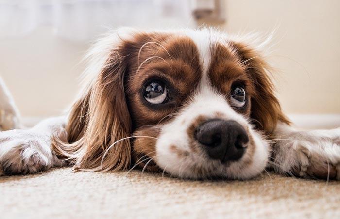Tierheim-Hund